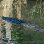 オーストラリアの世界遺産:カカドゥ国立公園 観光・旅行情報まとめ