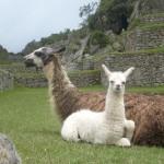 マチュピチュの歴史保護区 観光情報まとめ