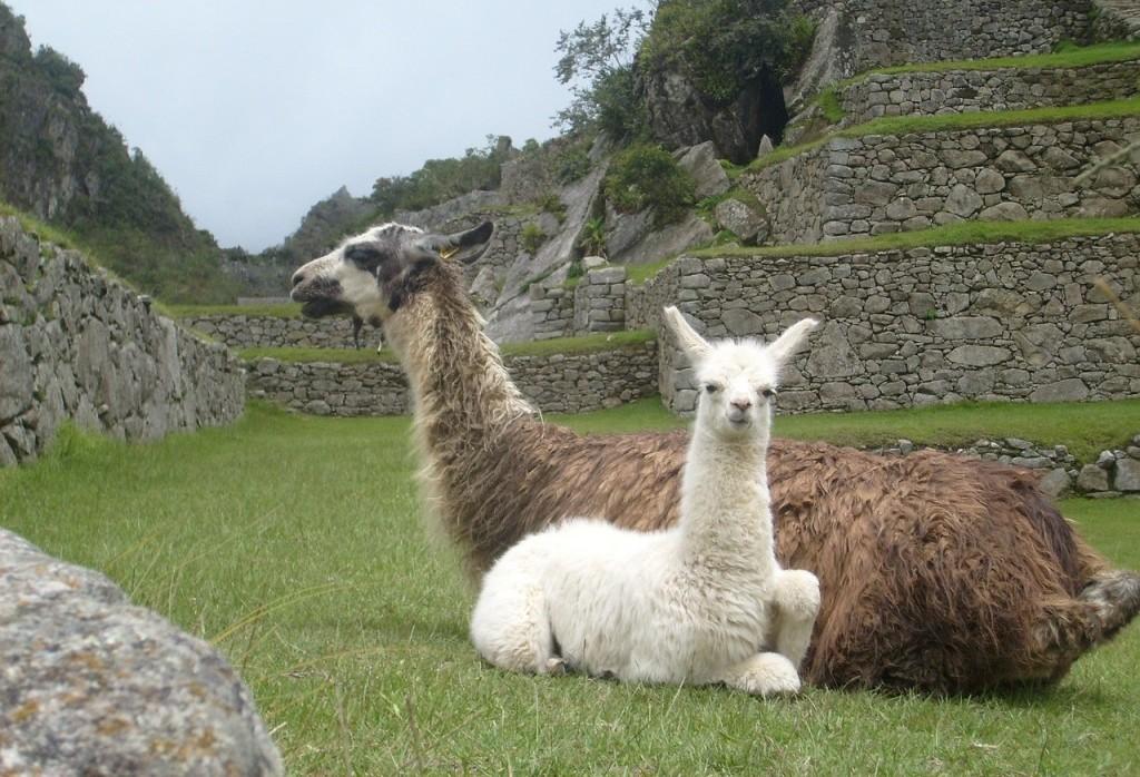 ペルーの世界遺産・マチュピチュの歴史保護区