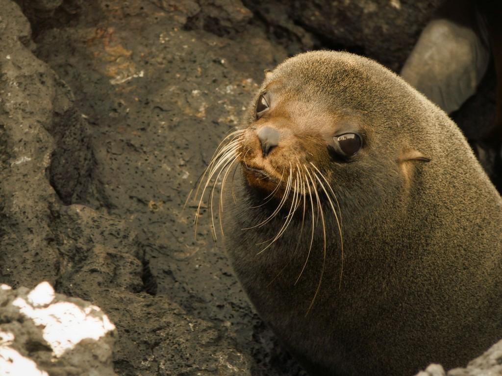 sea-lion-298333_1280