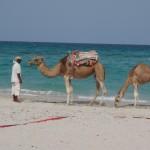チュニジアの基本情報-時差、言語、人口、宗教、首都、飲料水など