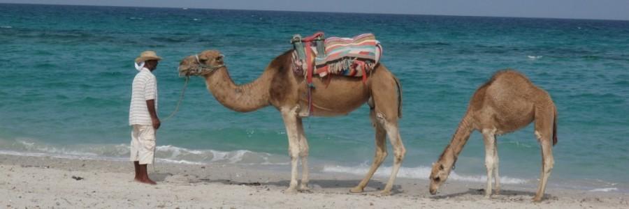 チュニジア旅行・観光情報