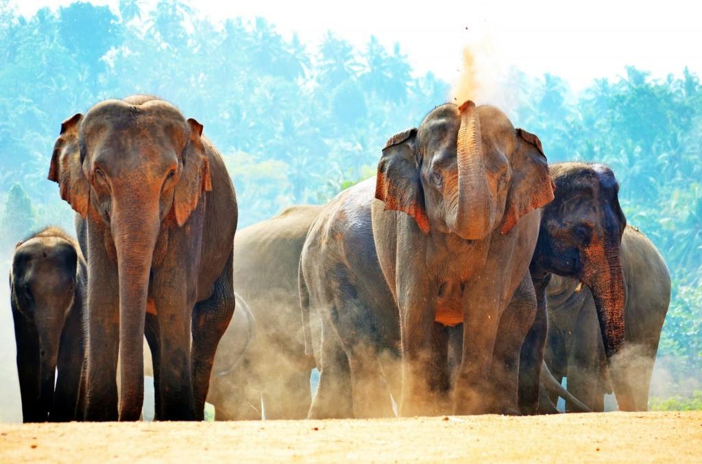 elephants-266124_1920