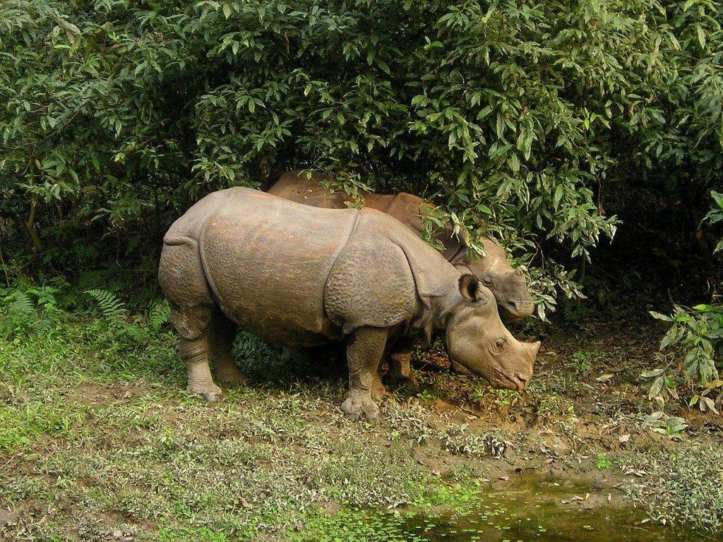 rhino-382_1280