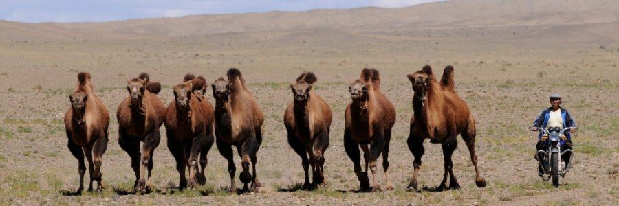 モンゴル旅行・観光情報