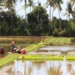 インドネシアの気候と観光・旅行のベストシーズン
