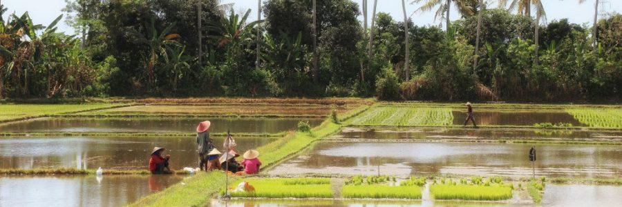 インドネシア旅行・観光の気候とベストシーズン