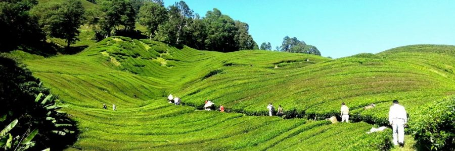 マレーシア観光・旅行の入出境審査