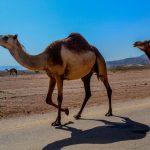 オマーン観光・旅行での入国とビザ申請・取得方法