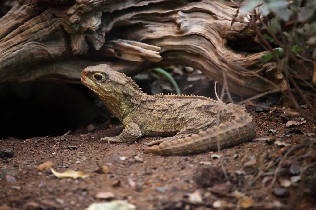 エクアドルの世界遺産:ガラパゴス諸島