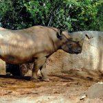 誰でも簡単に行ける?ネパールの世界遺産:チトワン国立公園への行き方!