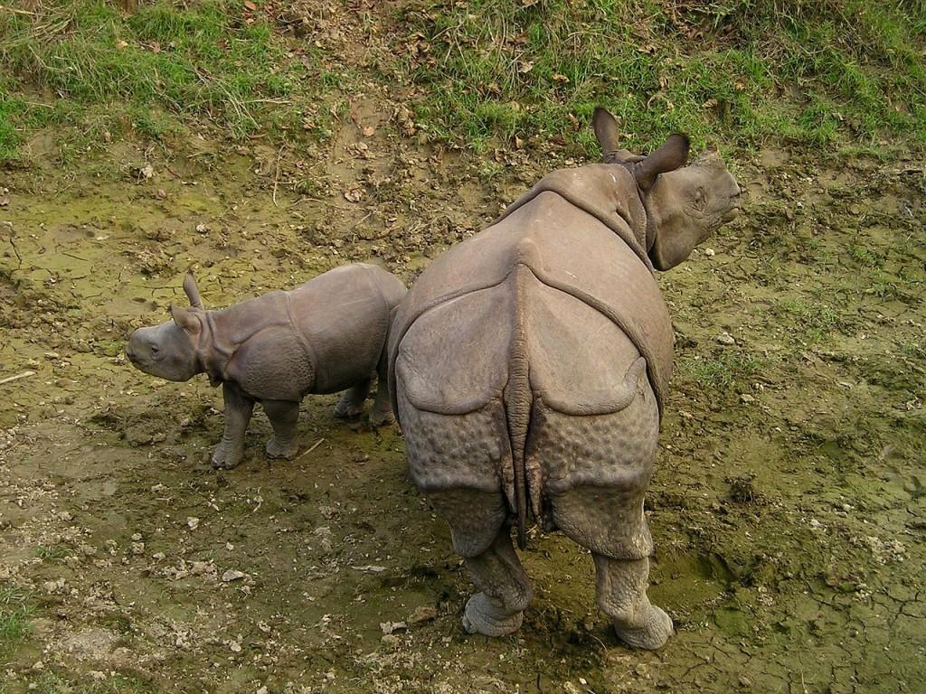 ネパールの世界遺産:チトワン国立公園