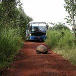誰でも行ける?世界遺産ガラパゴス諸島への行き方!