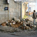 エチオピアの気候とベストシーズン