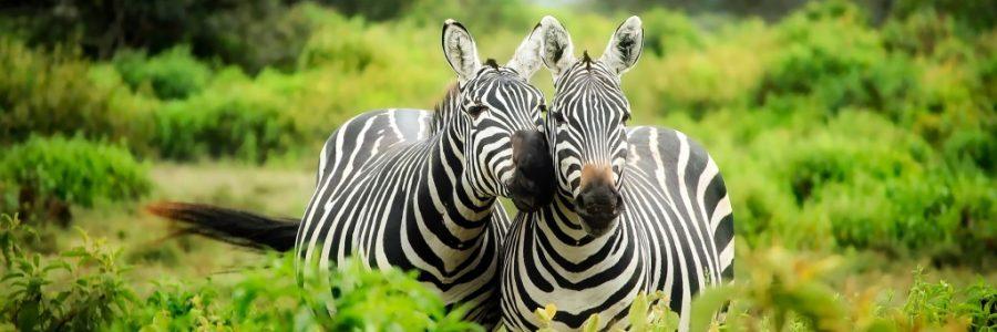 ケニア旅行・観光情報