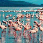 ケニアの気候と観光・旅行のベストシーズン