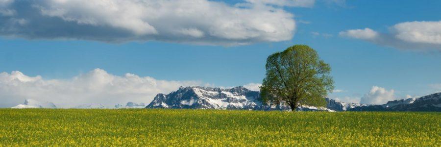 スイス旅行・観光情報
