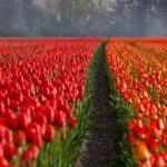【雨と気温】オランダの天気・気候の特徴と観光・旅行のベストシーズン